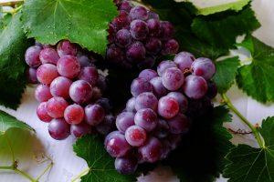 """ענבים לריפוי עצבים - תזונה טיפולית ד""""ר דרור רובינסון"""