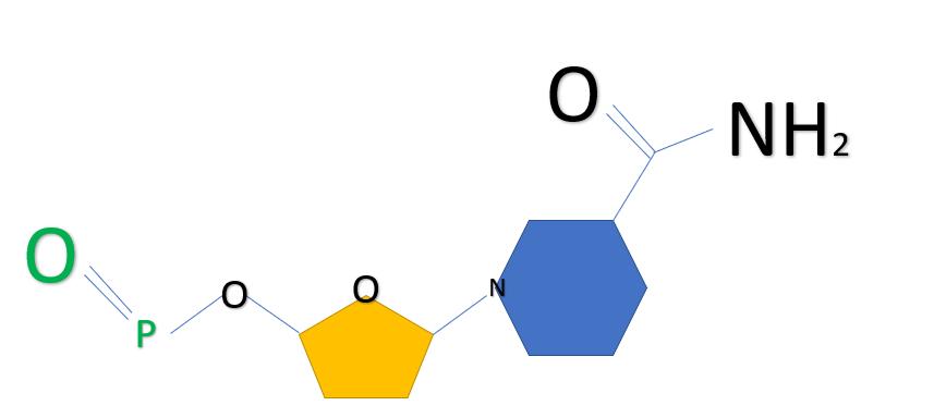 מולקולת NMN