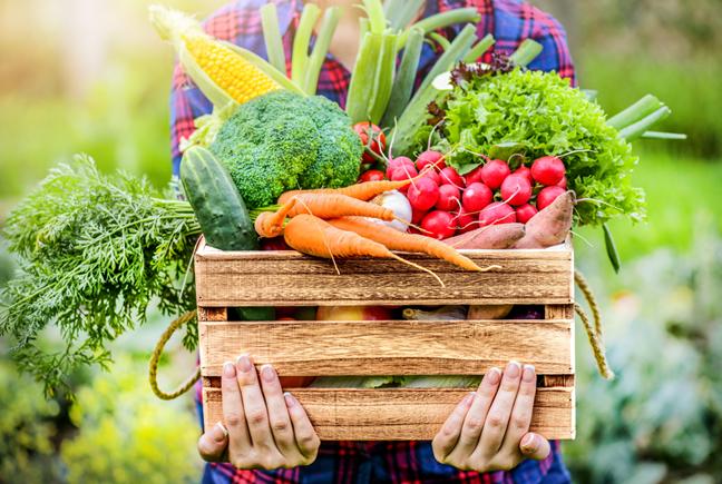 הקשר בין חומרי הדברה והשמנה