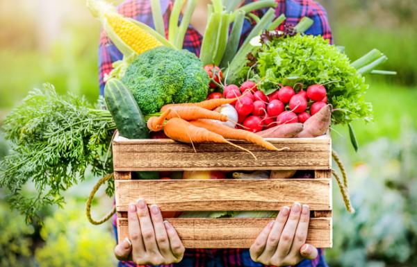 הקשר בין חומרי הדברה לבין מגפת ההשמנה